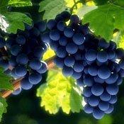 Системи захисту виноградників