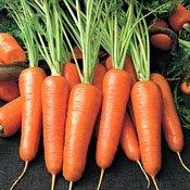 Системи захисту моркви