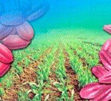 Протруйник насіння шнековий в Україні