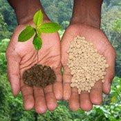 Купити гербіцид на кукурудзу в Україні