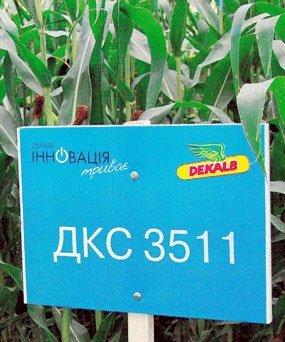 Насіння кукурудзи оптом