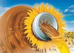 Насіння соняшнику купити оптом